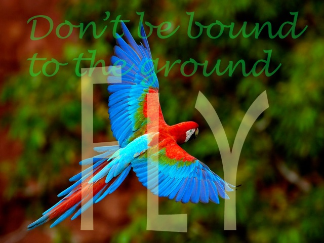 If you want to fly, you have to try